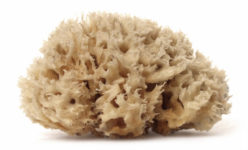 sea-wool-sponge-limnos