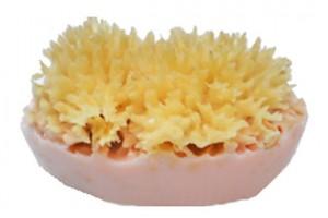 Sponge Soap bath product